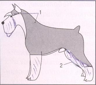 Стрижки цвергшнауцера схема
